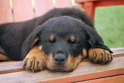 Dog Awake2